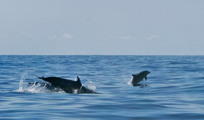 costa rica, singlereisen, urlaub, sámara, playa, delfin tour, urlaub, travel,