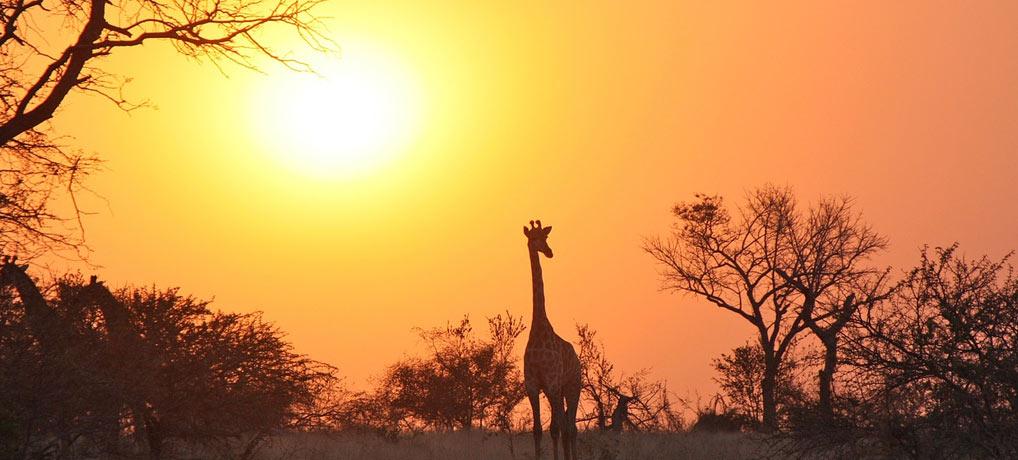 singlereisen, singleurlaub, flüge, afrika, sambia, lusaka,,travel,