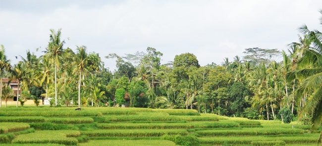 bali_ubud, bali, singleurlaub, singlereise, travel, indonesien, travelbird