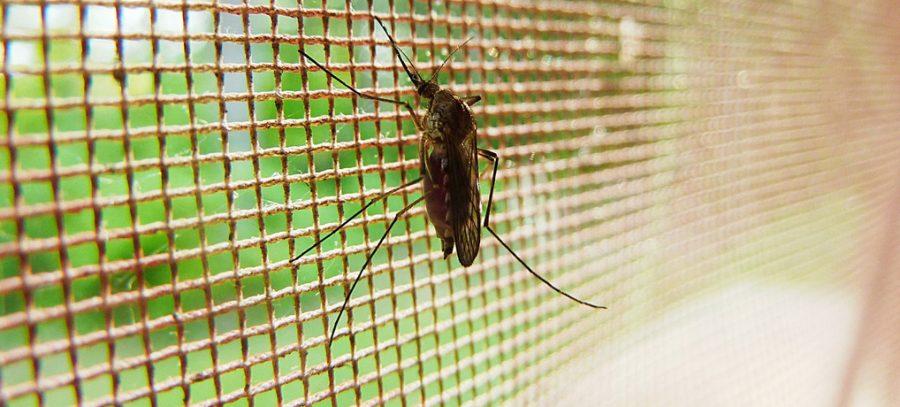 malaria, tropen, mosquito, schutz, reisen, singleurlaub