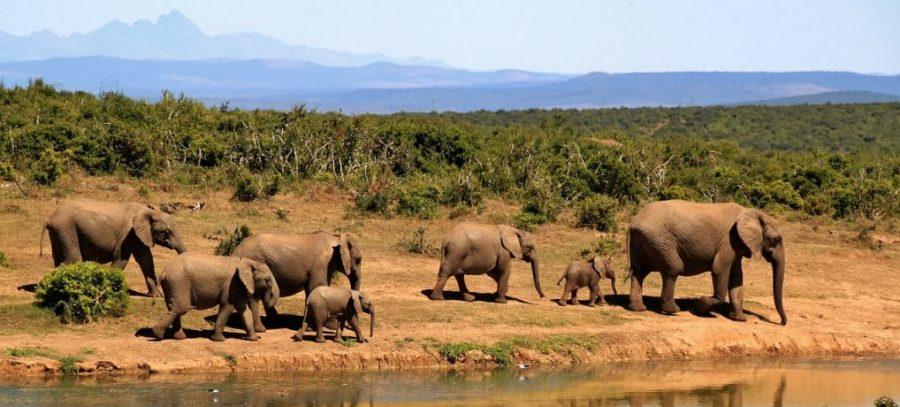 gruppenreisen, afrika, alleine reisen