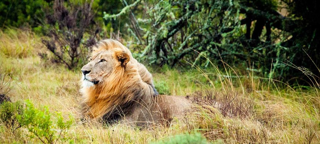 südafrika, safari, singleurlaub, reiseziele mai, urlaub im mai, alleine reisen
