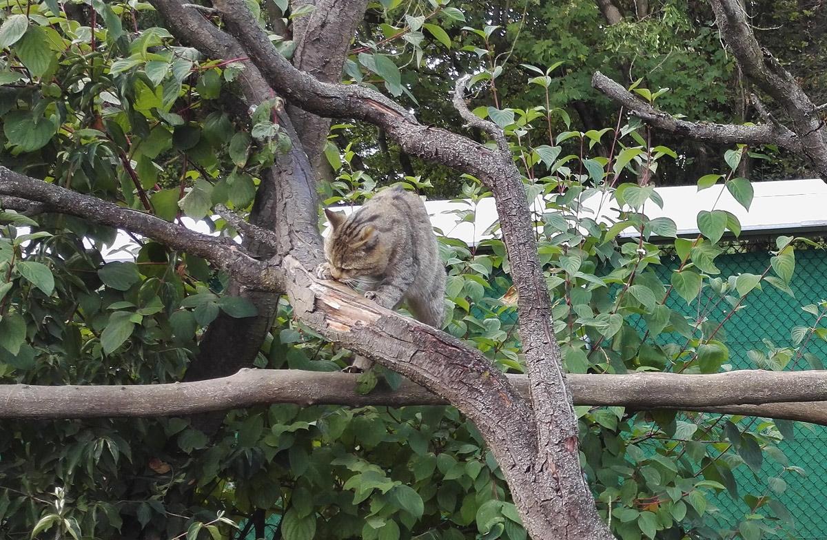Wildkatzen, thüringen Huetscheroda, Nationalpark Hainich, Bad Langensalza