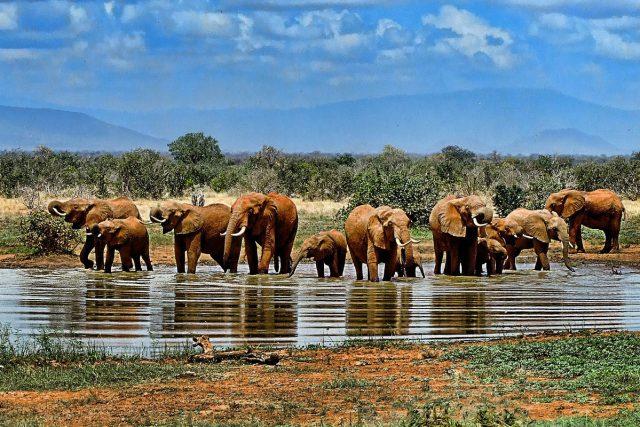 suedafrika fluege johoannesburg safari kruger nationalpark