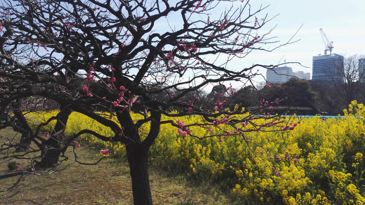 Tokio Tipps Himarikyu Gardens