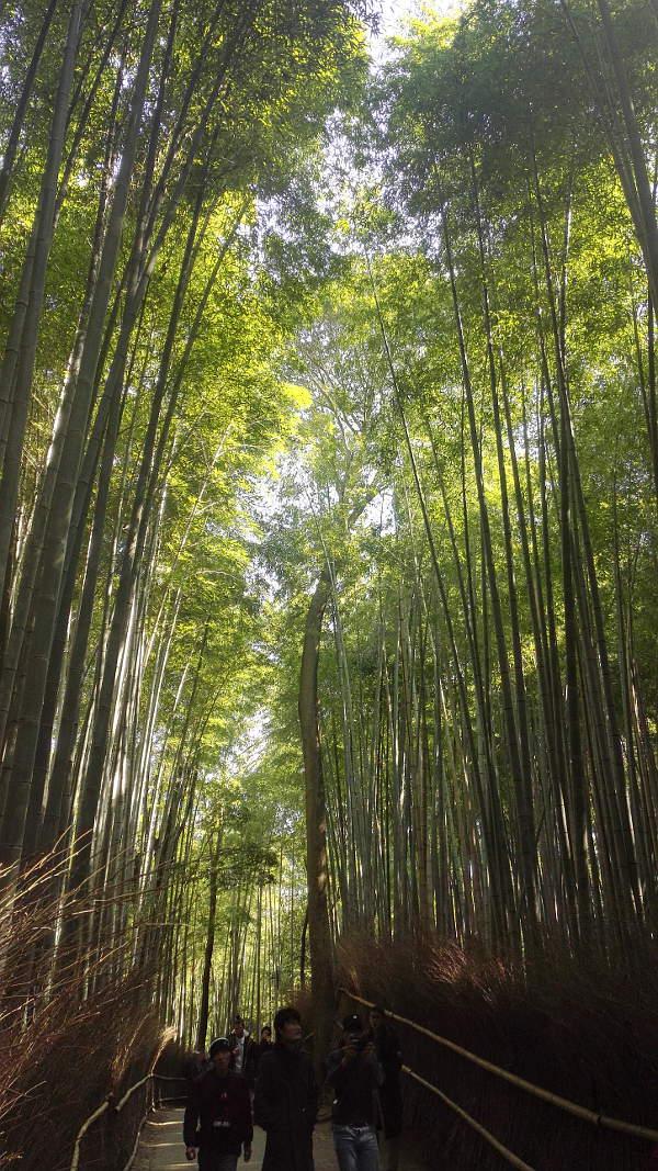 Reisetipps kyoto, Arashiyama, bamboo forest, japan